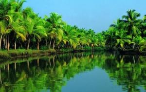 Новогодний тур в Кералу!