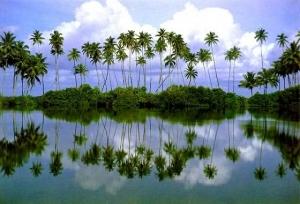"""""""Лучшее Шри Ланки"""" экскурсии + океан! Тур на 11 дней"""