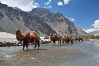 Удивительные Кашмир и Лех